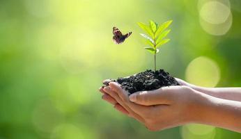 mão feminina segurando uma árvore no fundo da natureza com uma borboleta foto