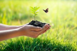 conceito de mãos cultivando mudas em fundo verde bokeh foto