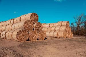 enormes pilhas de palha de feno enroladas em fardos em um campo colhido contra um céu azul foto