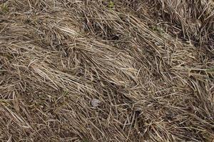 vista de cima na grama seca para segundo plano foto