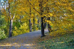 lindo beco romântico em um parque com árvores amarelas coloridas e luz do sol foto