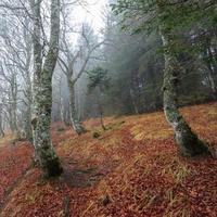 floresta ao redor de lac pavin em auvergne, frança foto