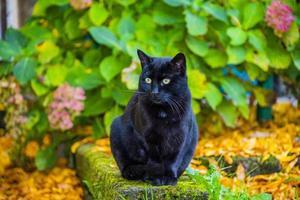 gato preto no jardim foto