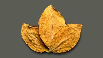 folhas secas de tabaco no fundo foto
