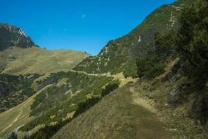 trilha alpina entre pinheiros da montanha foto