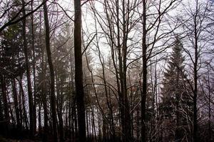 floresta de outono com nevoeiro foto