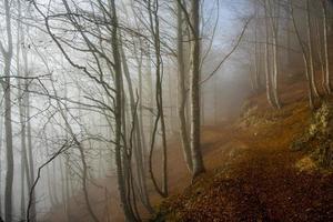 floresta e contos de fadas foto