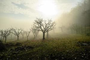 árvores na névoa foto