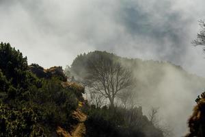 árvore no nevoeiro foto