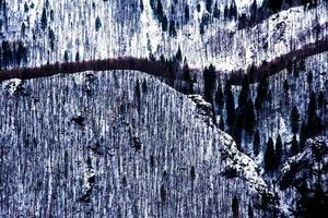 árvores e neve foto