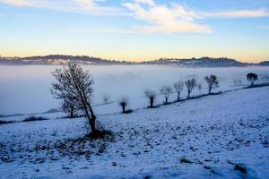 árvores entre neve e nevoeiro foto