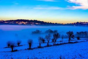 árvores entre neve e nevoeiro um foto