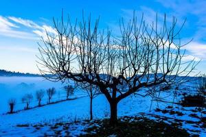 árvore entre a neve foto