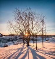 nascer do sol através de uma árvore seca com sombra na neve foto