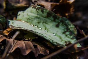 20210313 gotas de água na folha verde foto