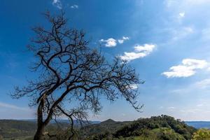 2021418 perfis de árvore castelgomberto foto