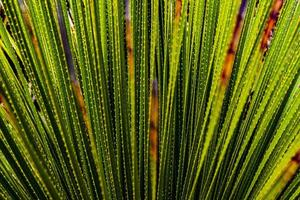 coberto por vida verde foto
