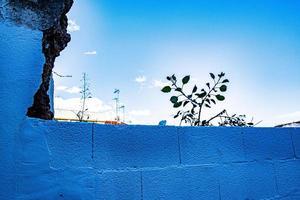 tijolos azuis planta pequena e muito céu foto