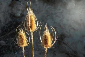 Belo close-up de uma flor de cardo com efeito bokeh foto