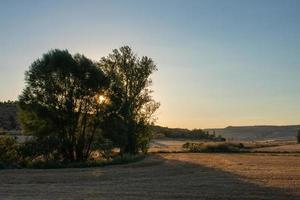 pôr do sol atrás de algumas árvores no campo agrícola foto
