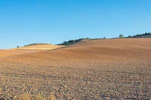 campo semeado com cereais em um dia ensolarado com céu azul foto