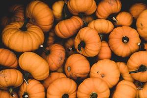 lote de abóbora laranja foto
