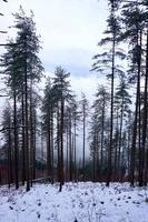 neve na montanha no inverno foto