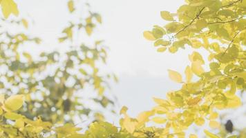 outono no parque foto