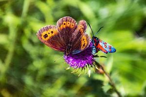 duas borboletas em uma flor foto