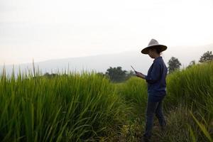 agricultora usando um tablet digital enquanto plantava mudas de arroz verde em um arrozal com um lindo céu e nuvens foto