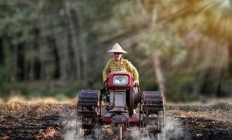 agricultora usando o trator ambulante para arar a planta de arroz em período chuvoso foto