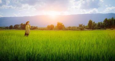 mulher agricultora olhando mudas de arroz verde foto