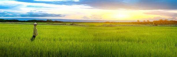 mulher agricultora fica olhando mudas de arroz verde em um campo de arroz com um lindo céu e nuvens foto