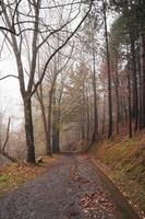 estrada na floresta na temporada de outono foto