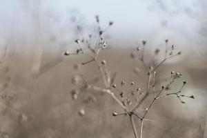 raminho de geometria fractal de planta seca foto