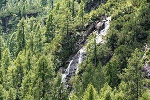 cachoeira entre os pinheiros foto