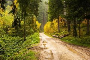 estrada de terra e floresta foto