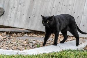 gato preto andando no quintal foto