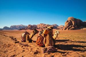 camelos no deserto de Wadi Rum, no sul da Jordânia foto
