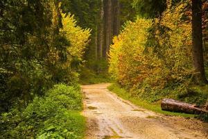 estrada de terra na floresta foto