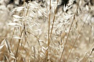 lindo fundo calmante de grama seca com padrão natural sem emenda foto
