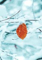 neve na folha vermelha no inverno foto