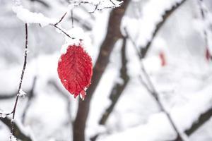 neve na folha vermelha foto