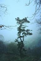 árvores na floresta em dias de nevoeiro foto