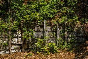 cerca de madeira coberta de vegetação foto