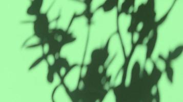 deixa sombras no papel de textura pastel verde. backgorund abstrato. foto. foto