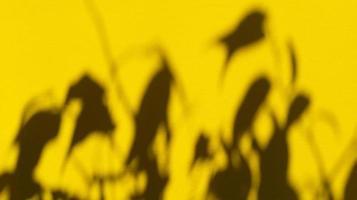 deixa sombras em papel amarelo pastel. backgorund abstrato. foto. foto