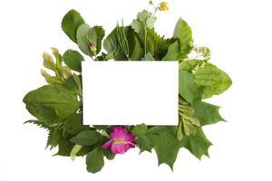 uma composição de papel branco e galhos de árvores com folhas verdes ao redor em um fundo branco. outdoor, layout de pôster para seu projeto. layout plano, vista superior, espaço de cópia foto