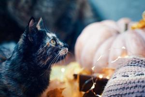 gato curioso fofo olha para cima. foto