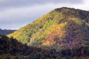 árvores de outono destacadas foto